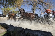Alltech FEI World Equestrian Games 2010