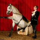 Freestyle dressage to music