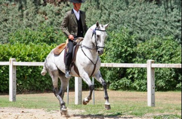 Southern French horse riding traditions