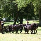 PIERIC's miniature horses