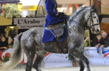 Side saddle quadrille