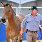 Andy Booth: I speak the Horse language