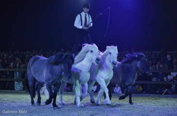 Pierre Fleury Highland Show
