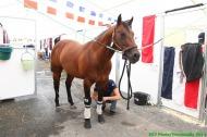 Reining's stables-Team France - ©PSV Photos