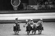 Shetland and Horse ball / 30 August 2014 - ©Sindy Thomas